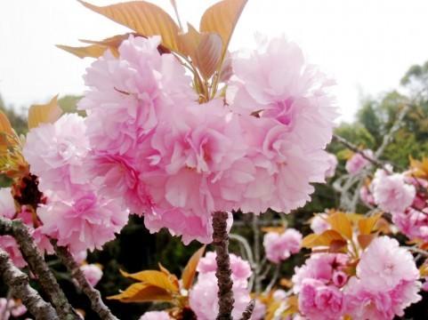 運命の愛を引き寄せる心の花嫁学校 斎藤芳乃のマリアージュスクール -pt60
